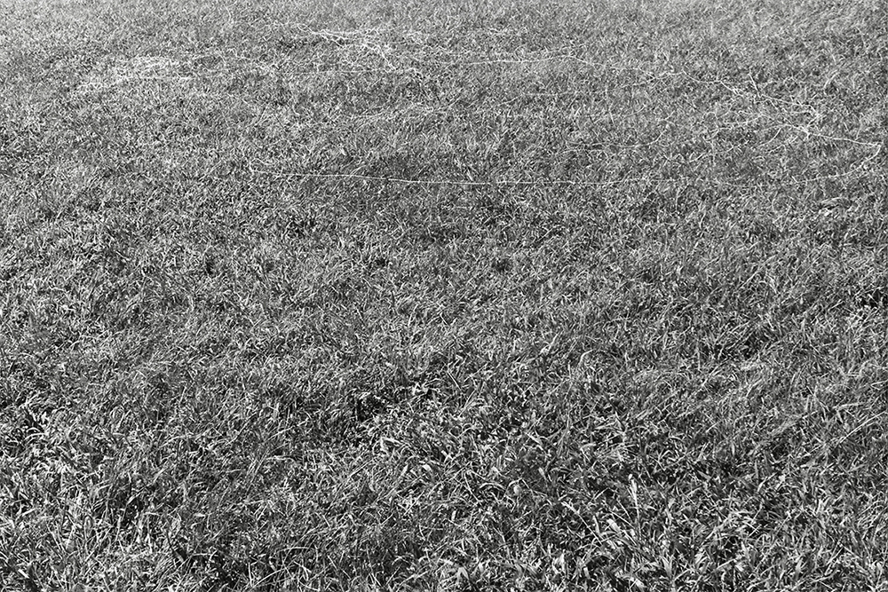 canvas thread blown by the wind while flying a kite Silver Lake Park variable dimension 2013